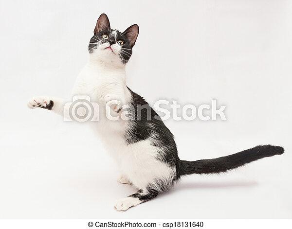 yeux sien danse taches chat noir fond jaune jambes post rieures blanc devant levage. Black Bedroom Furniture Sets. Home Design Ideas