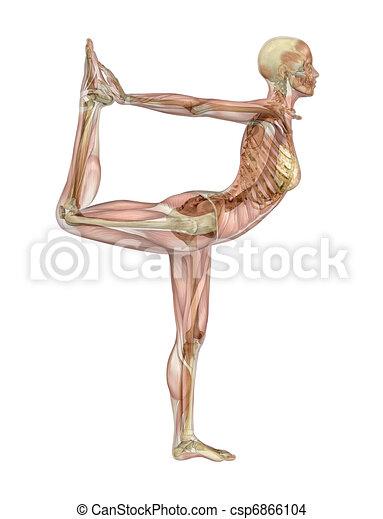 Posa de bailarina de yoga, músculo sobre esqueleto - csp6866104