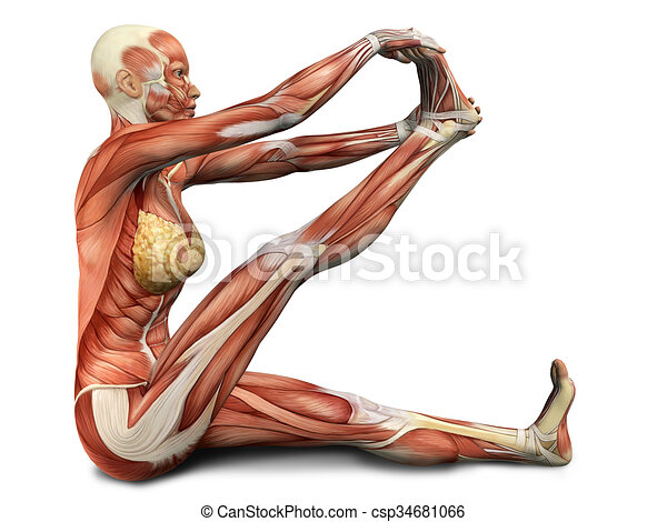 Yoga, figure, monde médical, pose, femme, 3d. Rendu, yoga ...