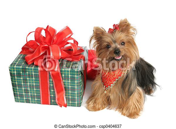 Yorkie Christmas - csp0404637