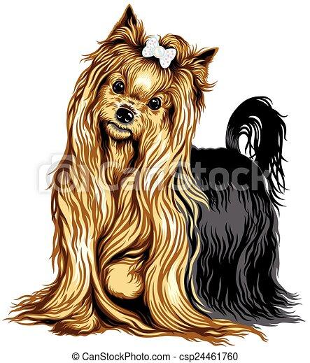 yorkshire terrier - csp24461760