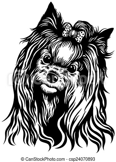 Yorkshire terrier csp24070893