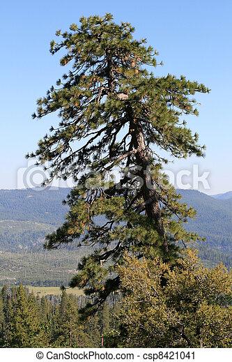 Yosemite National Park - csp8421041
