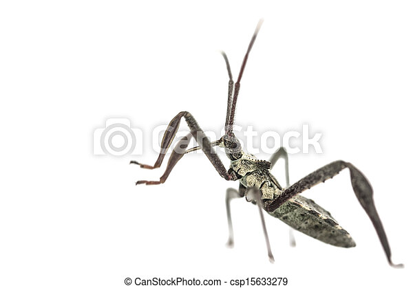 Young adult wheel bug macro - csp15633279