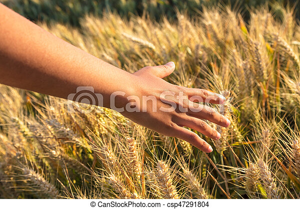 Young adult woman female girls hand touching a field of barley - csp47291804