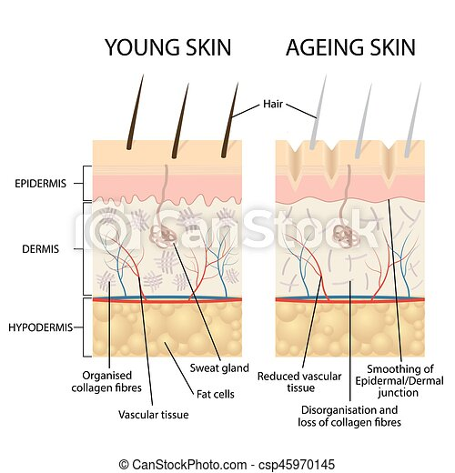 Young and older skin. - csp45970145