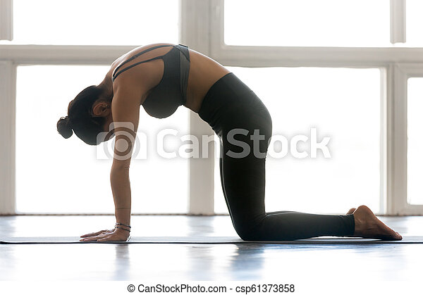 young attractive woman practicing yoga doing cat exercise