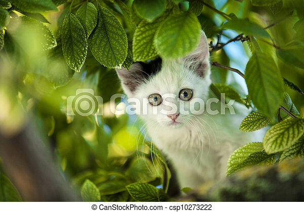 Young cat on tree. - csp10273222