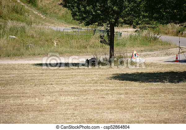 Young dog at the tree - csp52864804