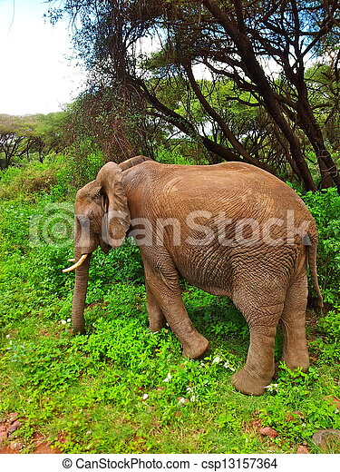 Young Elephant - csp13157364