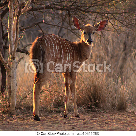 Young Female Njala with Winter Sunset Sun in Hair - csp10511263