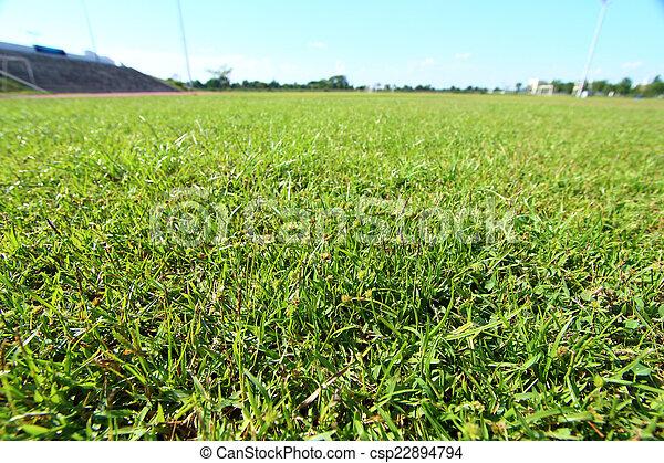 young green grass in a football stadium - csp22894794