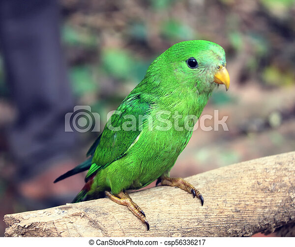 young Green Parrot on a branch in the forest - csp56336217
