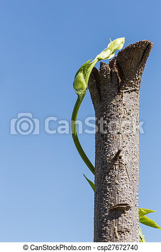Young green plant growing on tree - csp27672740