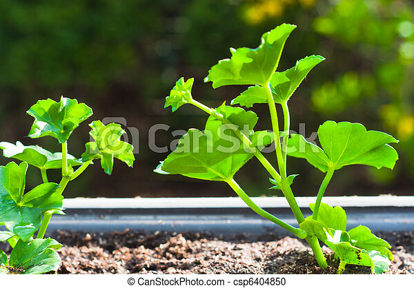 Young green plant in pot - csp6404850