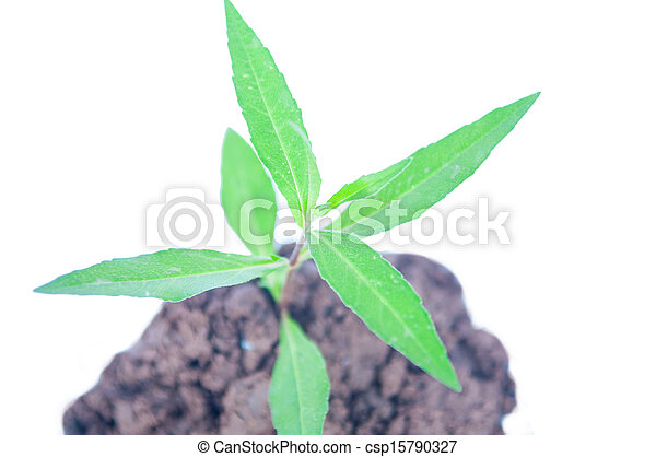 Young green plant on soil - csp15790327