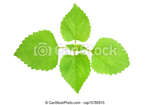 Young Green Plant on white background. - csp15785915
