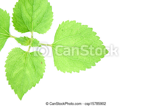 Young Green Plant on white background. - csp15785902