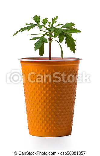 young growing plant in a pot - csp56381357