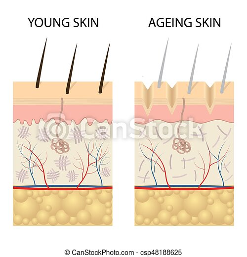 Young healthy skin and older skin comparison. - csp48188625
