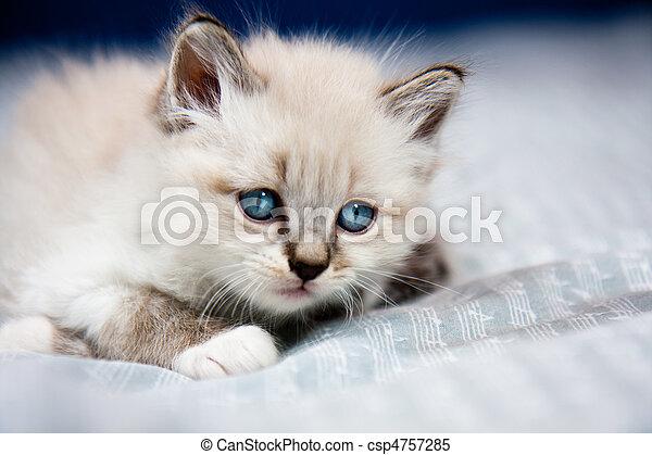 Young kitten clear coat - csp4757285