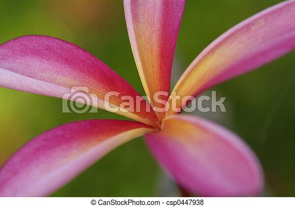 Young leaf of plumeria - csp0447938
