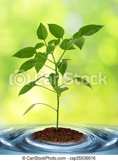 Young plant growing from soil - csp35536616
