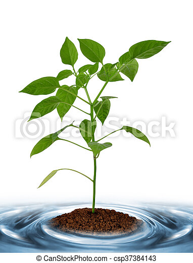 Young plant growing from soil - csp37384143