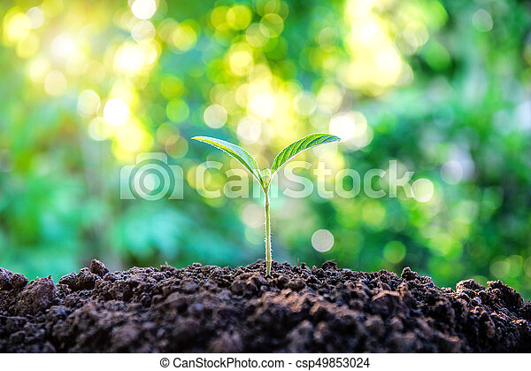 Young plant growing in nature. - csp49853024