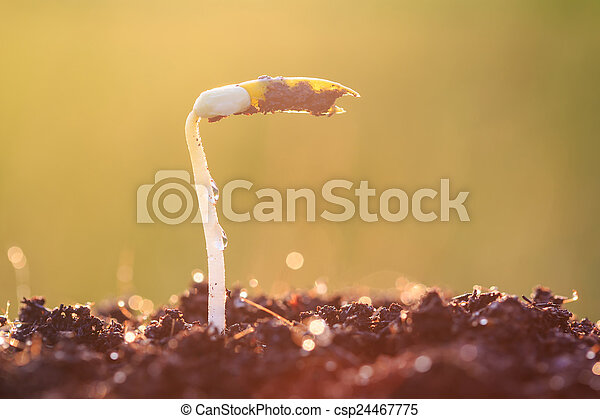 Young plant growing on soil - csp24467775