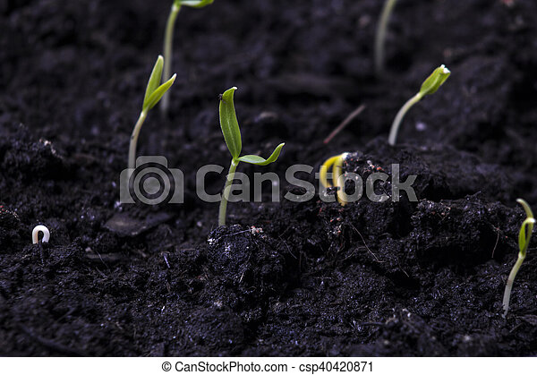 Young Plant Growing On Soil - csp40420871