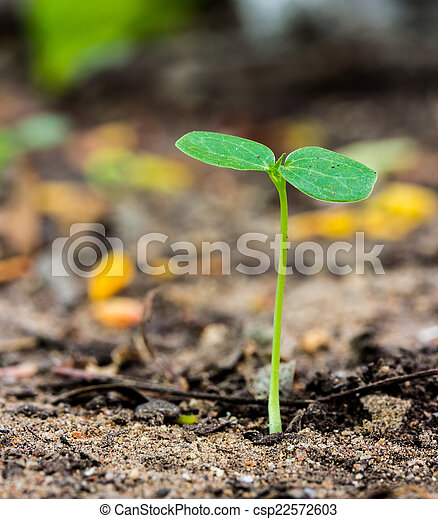 young plant growing on soil - csp22572603