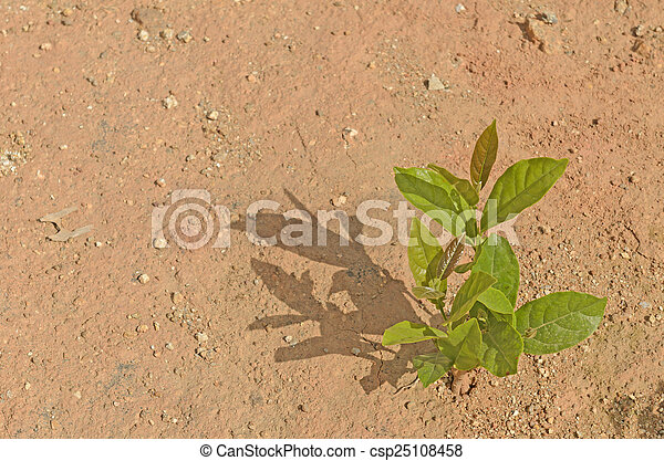 young plant growing on the dry soil - csp25108458