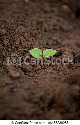 Young plant in a soil - csp58230285