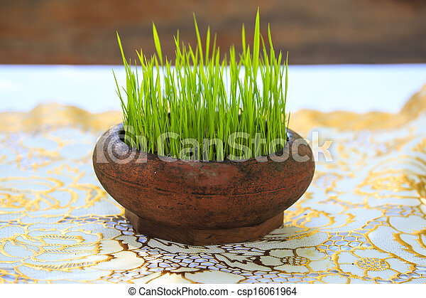 young plant in flower pot - csp16061964