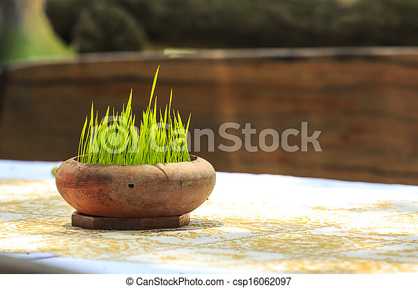 young plant in flower pot - csp16062097