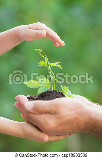 Young plant in hands against green background - csp18903509