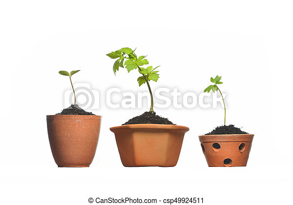 Young plant in pot isolated on the white backgrounds - csp49924511