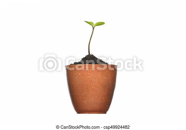 Young plant in pot isolated on the white backgrounds - csp49924482