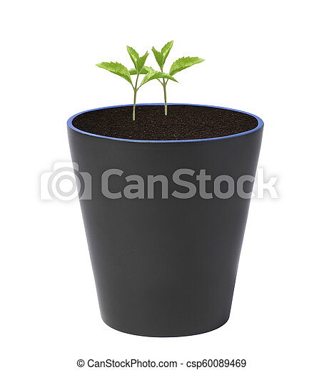 Young plant in pot isolated - csp60089469