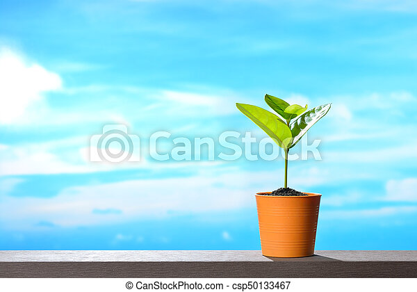 Young plant in pot on sky background - csp50133467