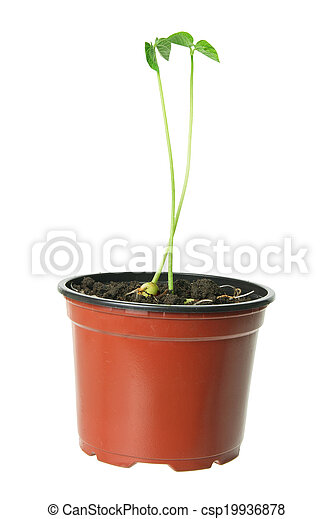 Young Plant in Pot - csp19936878
