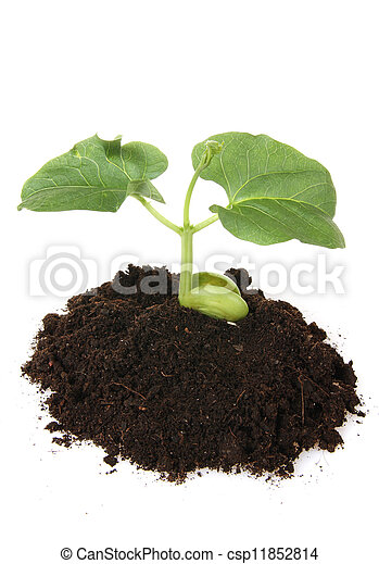 Young plant in the ground, isolated on white backgroun - csp11852814