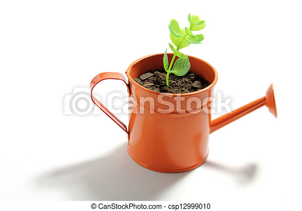 Young Plant in Watering Can - csp12999010