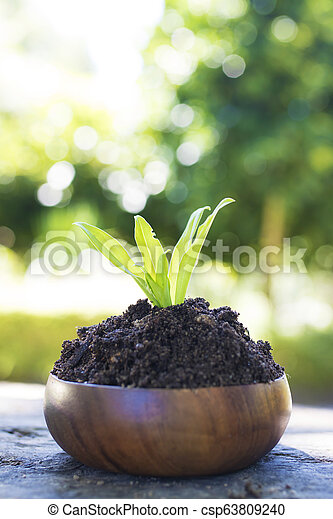 young plant in wooden pot - csp63809240