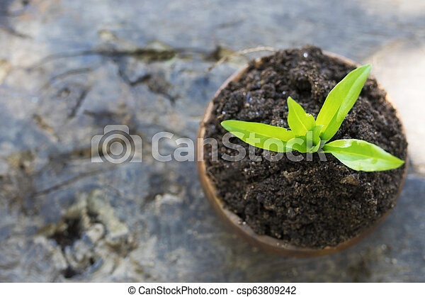 young plant in wooden pot - csp63809242