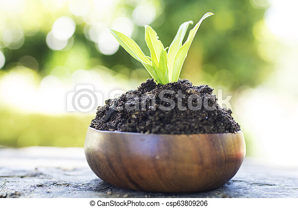 young plant in wooden pot - csp63809206