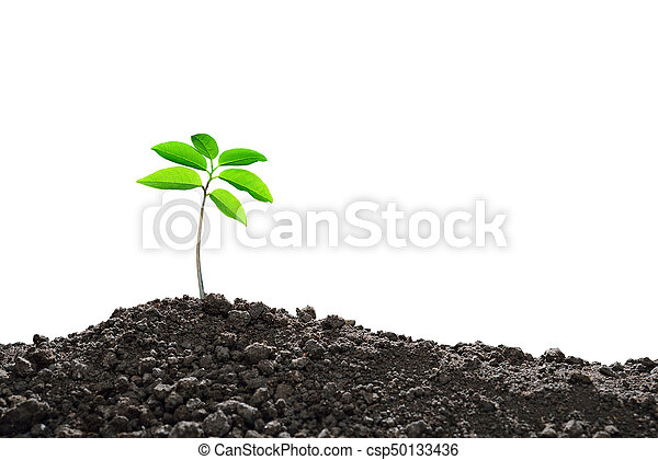 Young plant new life, isolated on white background - csp50133436