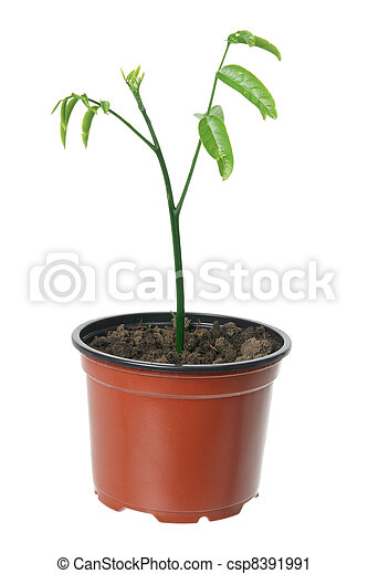 Young Plant - csp8391991