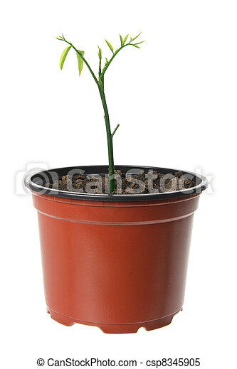 Young Plant - csp8345905
